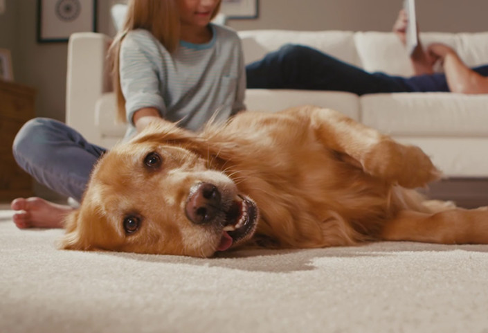 Buyers Guide Pet Friendly Flooring