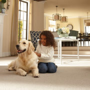 Cleaning With Your Pet In Mind, And Cleaning Up Accidents Too!